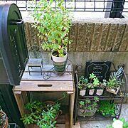 ガーデニング/強い植物が好き/パウダースノー/多肉植物…などのインテリア実例