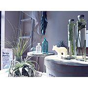 エアプランツ/雑貨屋さんで買った物/観葉植物のある暮らし/salut!/セリア…などに関連する他の写真