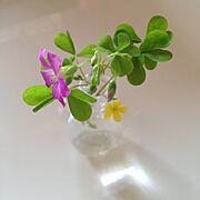 植物/My Desk…などのインテリア実例