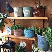 板壁DIY/いいね!ありがとうございます♪/暮らし楽しんでます♪/植物のある暮らし…などのインテリア実例