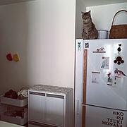 ペットと暮らす家/古道具/ねこと暮らす/狭い部屋/シャビーな雰囲気が好き/ナチュラル…などに関連する他の写真