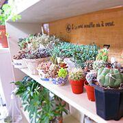 My Shelf/多肉棚 DIY/室外機カバーDIY/観葉植物/サボテン/多肉植物 寄せ植え…などのインテリア実例