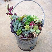 ミニ寄せ植え/ベランダガーデン/庭/ガーデニング/植物/多肉植物…などのインテリア実例