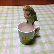 ダイソー/インコ/新商品買ったよ!/マグカップ/My Desk…などのインテリア実例