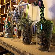 端材/CAN DO/100均/観葉植物/流木/流木ディスプレイ…などのインテリア実例
