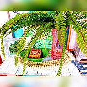 くらしのeショップ/コタツ/こたつのある部屋/こたつ/茶色と緑色が好き♡/お家モチーフ…などに関連する他の写真