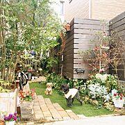 gardenに関連する他の写真
