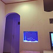 新築一軒家/海水水槽/塗り壁/スタッコフレックス/アール下がり壁/造作ドア…などのインテリア実例