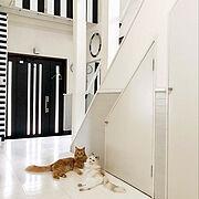 パーテーションDIY/猫と暮らすインテリア/モノトーン/マステリメイクのシューズbox/かがみDIY…などのインテリア実例