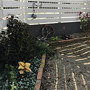 ガーデンじゃなくてガーデニング(笑)/ウッドフェンスDIY/イングリッシュガーデンに憧れて/手作りの庭…などのインテリア実例
