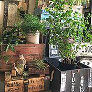 Green Life ☘/植物で楽しむインテリア☘/plants/GREEN LIFE…などのインテリア実例