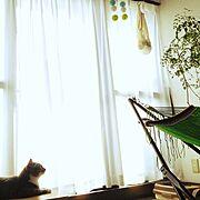 ハニカムボール/ハンモック/逆光/ねこのいる風景/小鉄/猫…などのインテリア実例