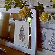 スタンドミラーリメイク/壁紙屋本舗/リメイクした壁面/モッコウバラ/1から手作りの庭*…などのインテリア実例