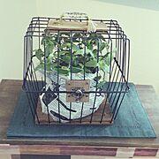 男前/カフェ風/観葉植物/RC北海道支部/DIY/いいね、フォロー本当に感謝です♡…などのインテリア実例