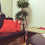 ソングオブジャマイカ/観葉植物/賃貸/1K/一人暮らし/Lounge…などのインテリア実例