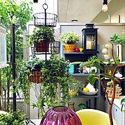 ガーデニング/RoomClipドラマ化/ストリングライト/イケア/植物のある生活/賃貸マンション…などのインテリア実例