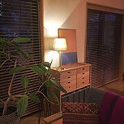 観葉植物にレイをかけて乾燥/フラガール/照明/中庭のある家/コラベル/わんこ…などに関連する他の写真
