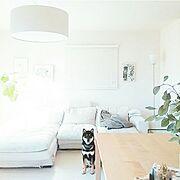 ソファー/花器/黒柴/柴犬/ダイニングテーブル/シンプルモダン…などのインテリア実例