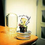 キノコ/植物/ハンドメイド/盆栽/Lounge…などのインテリア実例