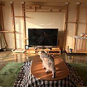 DIY/キャットケージ/キャットウオーク/無印のこたつ/緑のラグ/テレビボード DIY…などのインテリア実例