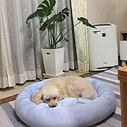 植物のある暮らし/犬と暮らす/ニトリ冷んやり/Overview…などのインテリア実例