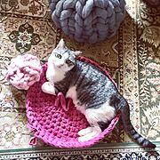 手編みのインテリア実例