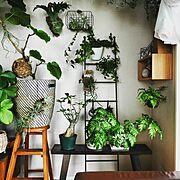 ラダー/植物/観葉植物/Lounge…などのインテリア実例