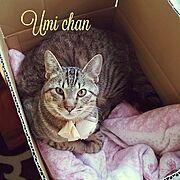 保護猫ちゃん/猫好き/ぬいぐるみ好き/Lounge…などのインテリア実例