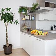 キッチンカウンター/緑のある暮らし/シンプルインテリア/海外インテリア/賃貸…などのインテリア実例