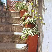 みどりのある暮らし/花のある暮らし/手作りプランター/外階段/Entrance…などのインテリア実例