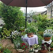 花が好き/寄せ植え/ガーデンセット/テーブルクロスはチェック柄/ギンガムチェック/パラソル…などのインテリア実例