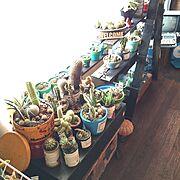 多肉植物/昭和レトロ/寄せ植え/サボテン/My Desk…などのインテリア実例