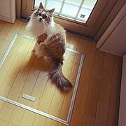 Green and cat/NO CAT NO LIFE/むすめ/Michell-fluffy…などのインテリア実例