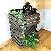 100均/300円SHOP/IKEA/観葉植物/DIY/ダイソー…などに関連する他の写真
