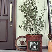 Entrance/オリーブの木/ロハスフェスタ…などのインテリア実例