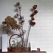 ダイソーエアプランツ/botanist/バスルーム/ボディーソープ/ボタニスト…などに関連する他の写真
