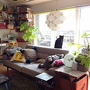 PACIFIC FURNITURE /ナチュラル/観葉植物/2015まで住んだリノベマンション/IKEA…などのインテリア実例