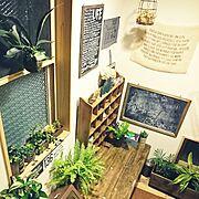 ダイニング/カフェ風/フェイクグリーン/観葉植物/Kitchenに関連する他の写真