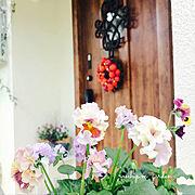 中古住宅/宿根草/ロザリアン/花のある暮らし/ガーデニング/リクシルの玄関ドア…などのインテリア実例
