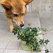オザキフラワーパーク/観葉植物♡/Entrance…などのインテリア実例