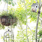 グリーンのある暮らし♡/ガーデン雑貨/鳥の巣箱/シマトネリコの木/築42年/中古住宅…などのインテリア実例