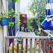 ナチュラル/庭/芝生/枕木花壇DIY/紅葉/ウッドフェンスDIY…などに関連する他の写真