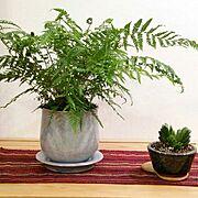 植物のある暮らし/盆栽/Entrance…などのインテリア実例