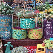 DIY棚/JUNK/りんご箱/ガーデニング用品/多肉植物寄せ植え/ベランダガーデン…などに関連する他の写真