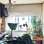 西海岸インテリアも好き♡/サーファーズハウスに憧れる/グリーンに囲まれ隊/観葉植物…などのインテリア実例