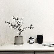 ドウシシャ/トタンボックス/トタンボックスが好き♡/スチールラックが好き♡/キッチン収納…などに関連する他の写真