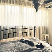 シンプルインテリア/猫と暮らす/持たない暮らし/アイアンベッド/海外のミニマリスト風に憧れる/ミニマムインテリア…などのインテリア実例