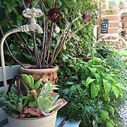 WOODPRO/みどりの雑貨屋/コンテスト参加中/多肉植物/リメイク/植物…などのインテリア実例