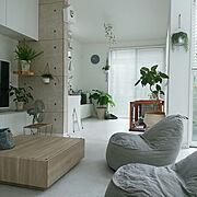 白い壁/ハンギング/アクセントクロス/コンクリート風壁紙/わんこと暮らす家/ウンベラータ…などのインテリア実例