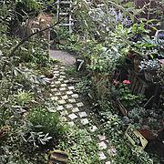 ジャンクガーデン/お庭/ガーデン/ガーデニング/自然と暮らす/小径…などのインテリア実例